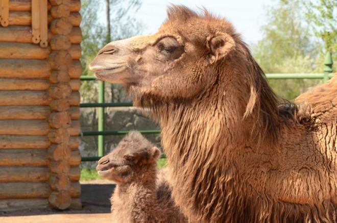 Ряжский зоопарк. Фото