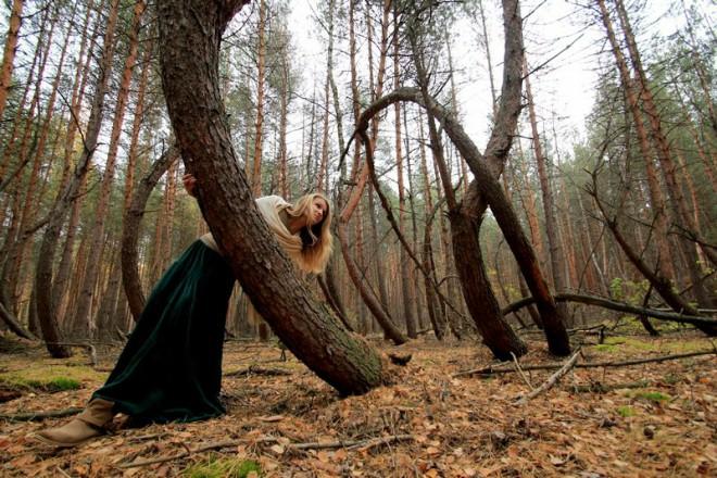 Пьяный лес. Фото