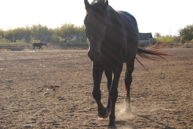 Старожиловский конный завод. Фото