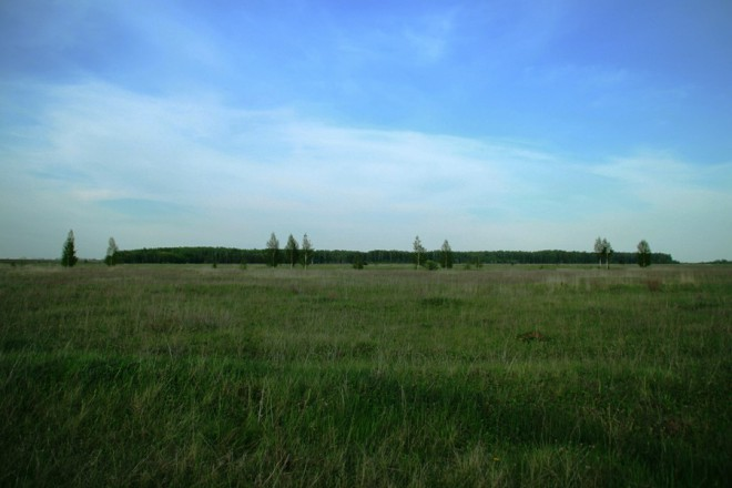 Шелудинский лес. Фото