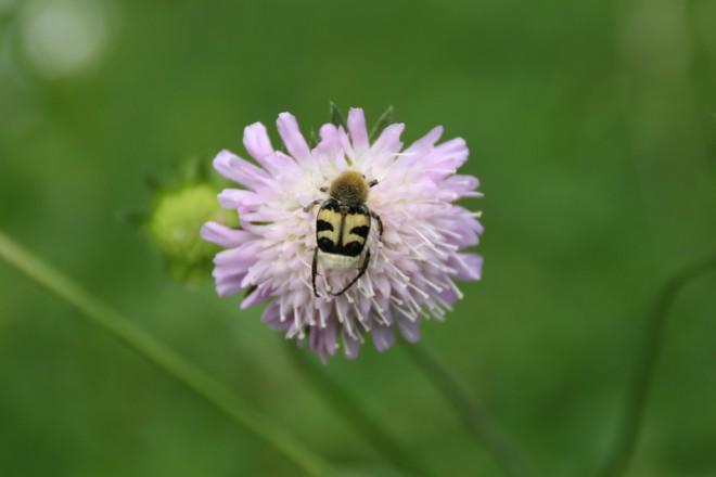 Новопанская дубрава. Фото
