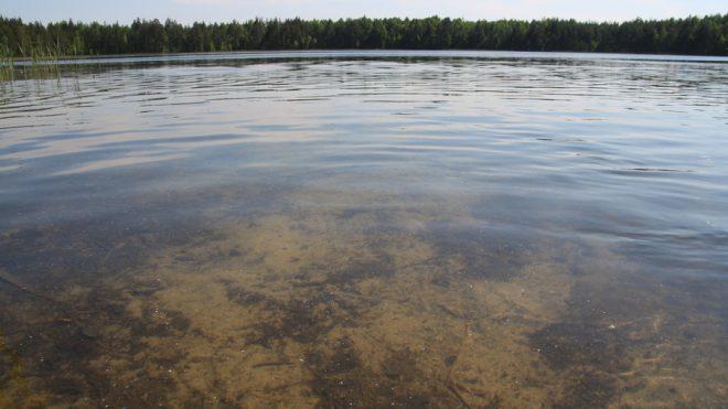 Светлое озеро. Фото